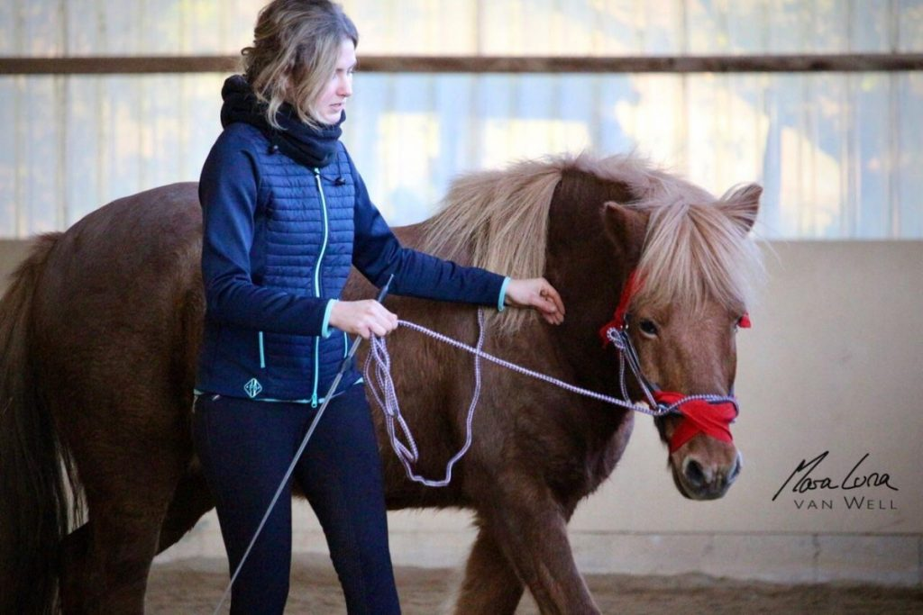 Carina Gerull als Kurs-Assistentin in der Bodenarbeit nach Connected Riding